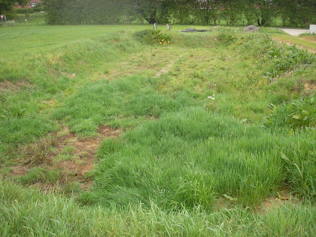 Grünlandversickerungsmulde